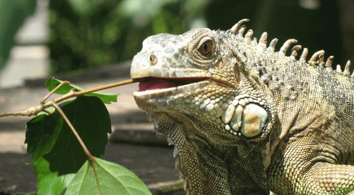Exotics, Pocket Pets & Birds